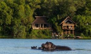 Hippos wallow in the waters in the Zambezi below Tongabezi Lodge