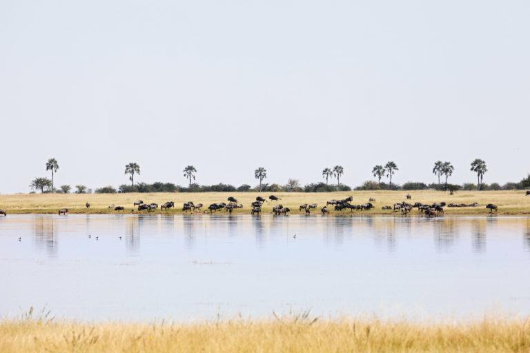 San Camp Makgadikgadi view of plains game