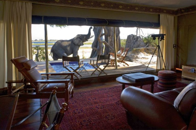 Elephant visitor to the exceptional Zarafa Camp