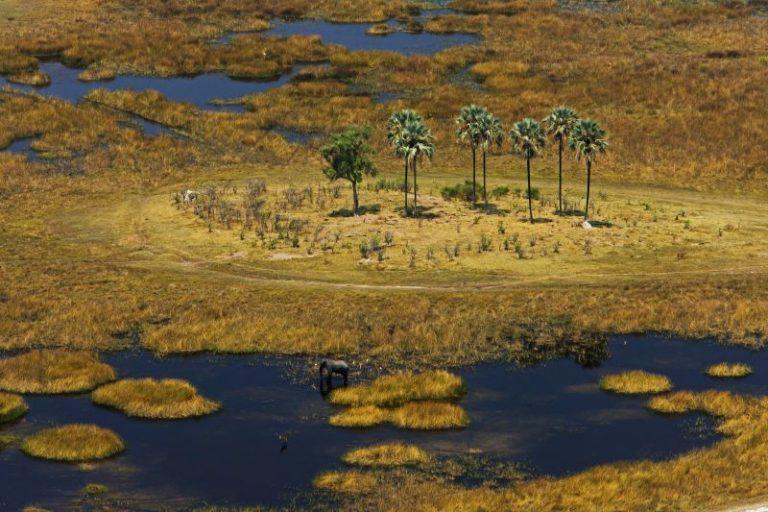 Delta landscape with Lala Palms surrounding Zafara Camp