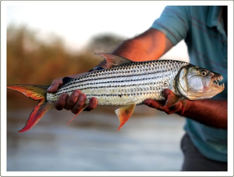 The rewards of a fishing boat excursion from Shakawe River Lodge