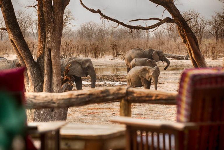 Elephants in dry landscape as seen from Hyena Pan
