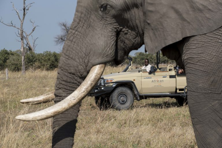 Elephant up close on game drive from Khwai Tented Camp
