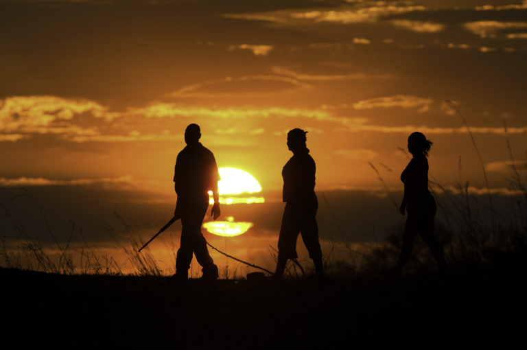 Selinda's guided walks bring guests in close proximity to big game