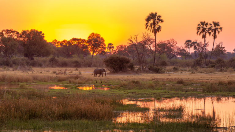 Elephants abound in this area around Amber Camp