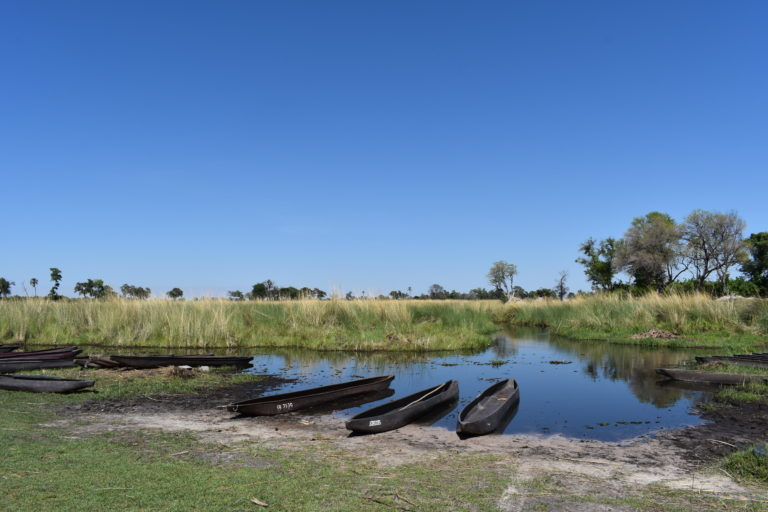 Mokoro excursions from Camp Maru are a highlights for guests