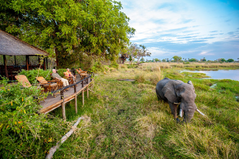 An elephant wonders by the main deck at Delta Camp
