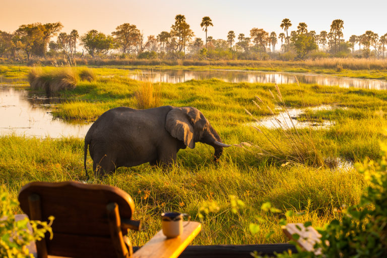 View from a guest tent at Delta Camp across the Okavango