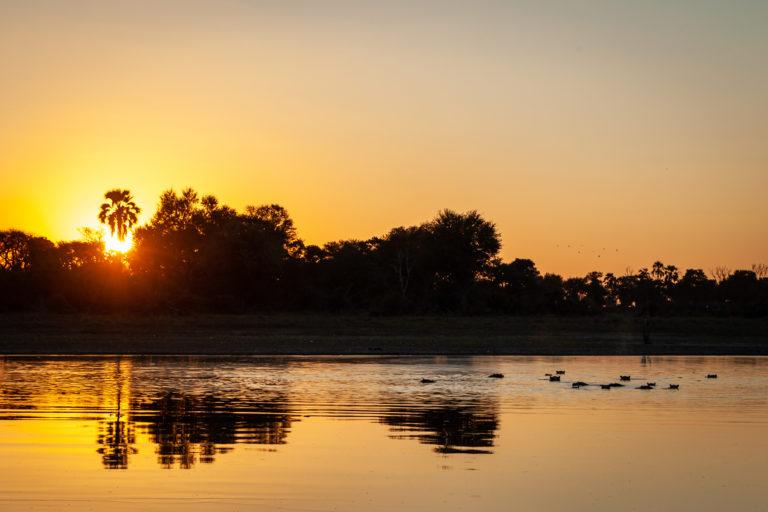 Hippos in the waters around Kiri Camp at sunset