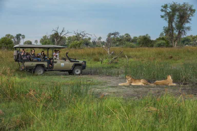 Exciting game drives at Kiri Camp with lion sighting
