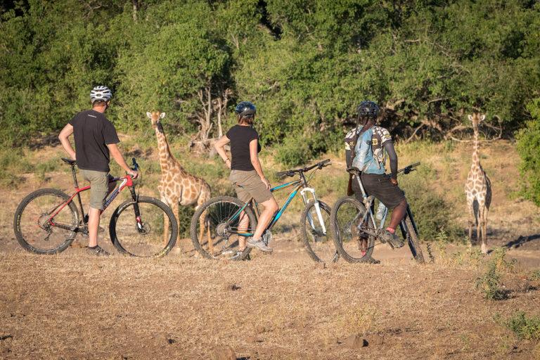 Admiring the wildlife while on a cycling safari at Mashatu