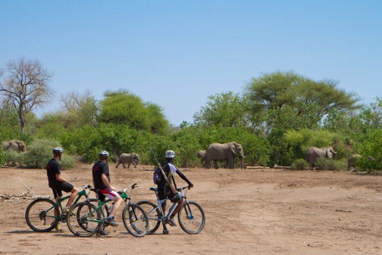 Appreciating the wildlife on cycling safari at Mashatu