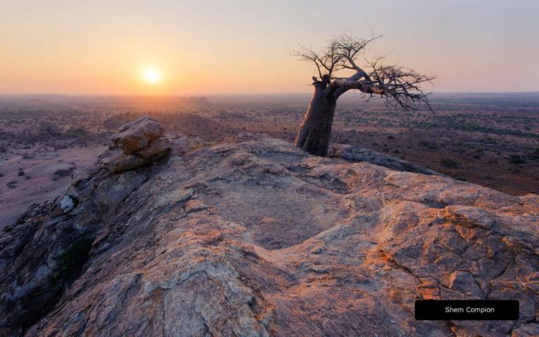 Views over the plains of Mashatu Reserve