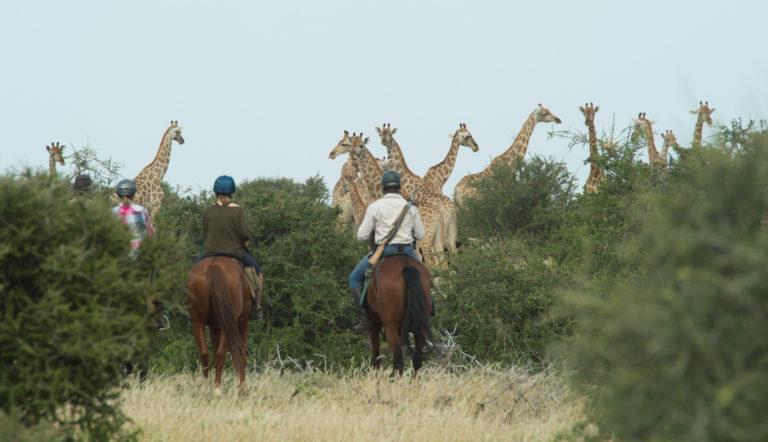 Mashatu's horse riding safaris offer a different perspective on safari