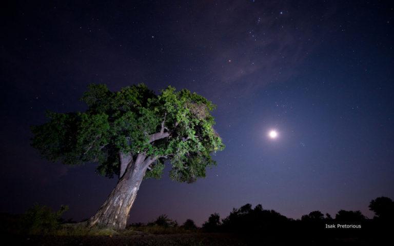 Dazzling skies around Mashatu