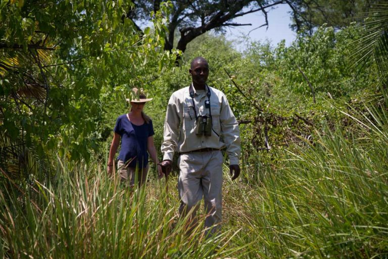 Guided bush walks from Mopiri Camp are fascinating