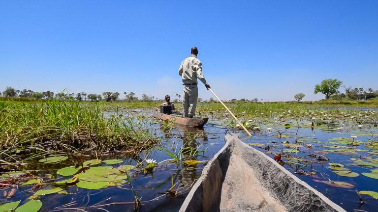 Mokoro rides are a quintessential Okavango experience to enjoy at Oddballs