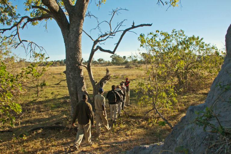 Walking safaris are part of daily activities at Oddballs