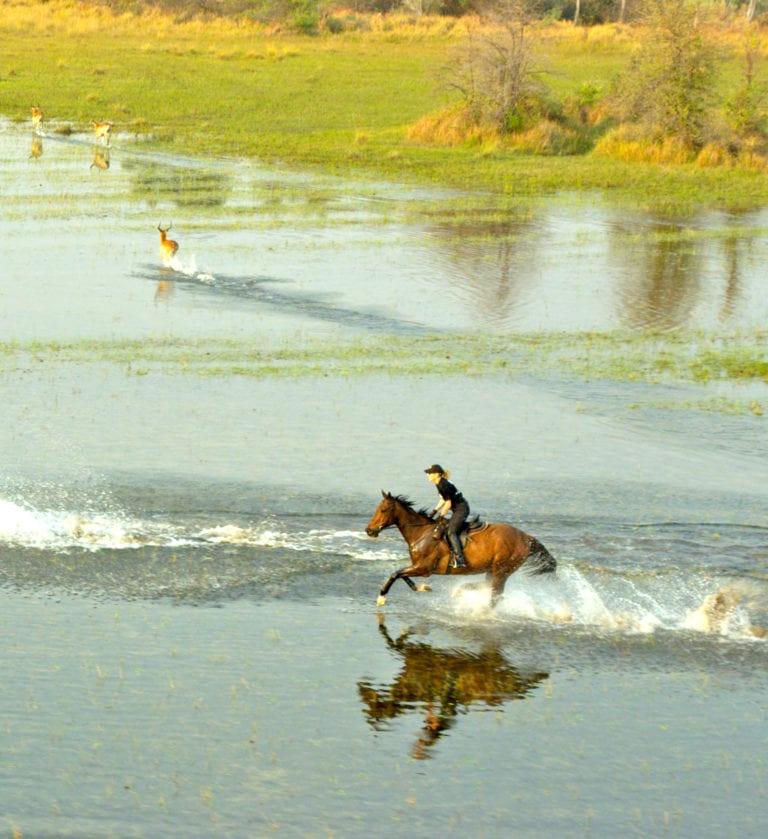 Okavango Horse Safari cantering through floodplains