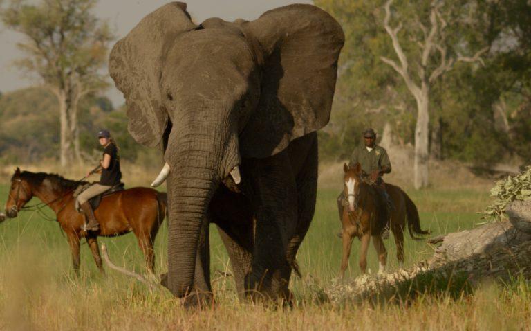Okavango Horse Safari riders with elephant up