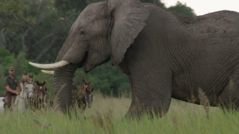 Okavango Horse Safari riding with elephants