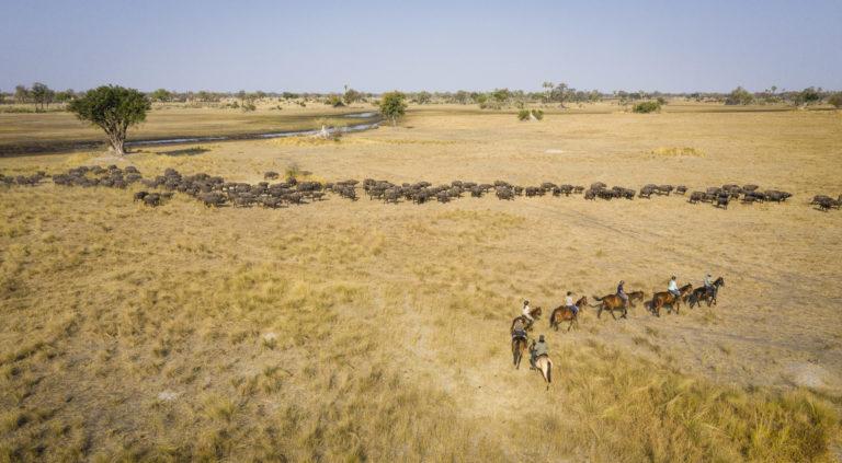 Okavango Horse safari trail