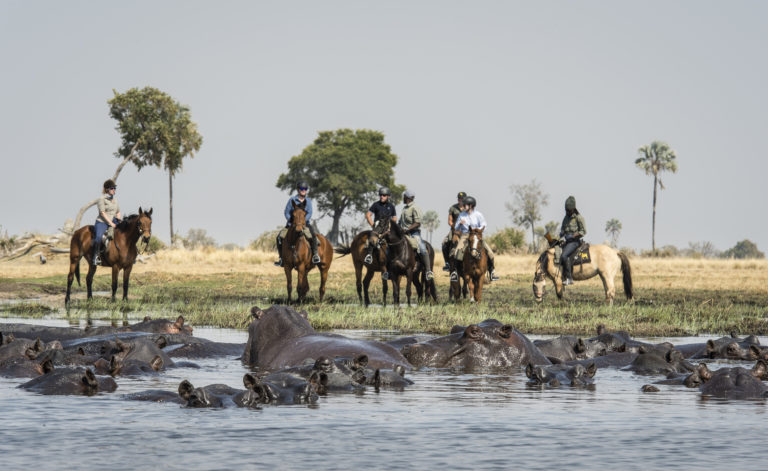Crossing water on an Okavango Horse Safari