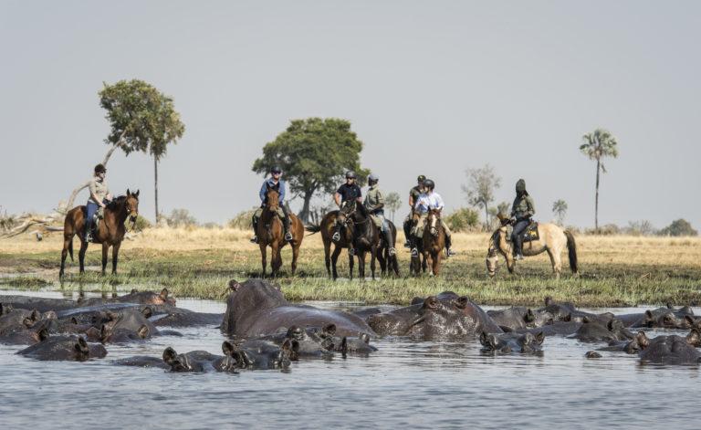 Horses approaching water crossing with Okavango Horse Safaris