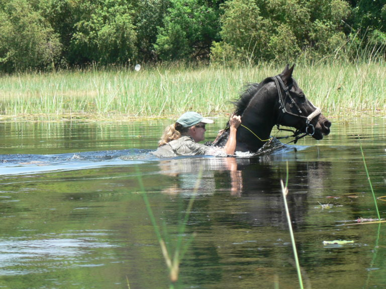 An Okavango Horse Safaris rider clings to her horse as he takes to the water