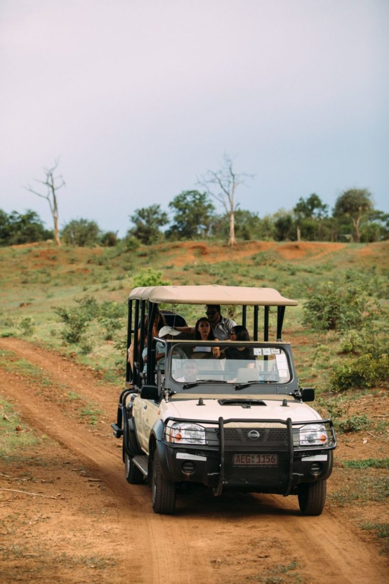 Enjoy game drives in the Wild Horizons Sanctuary when staying at The Wallow