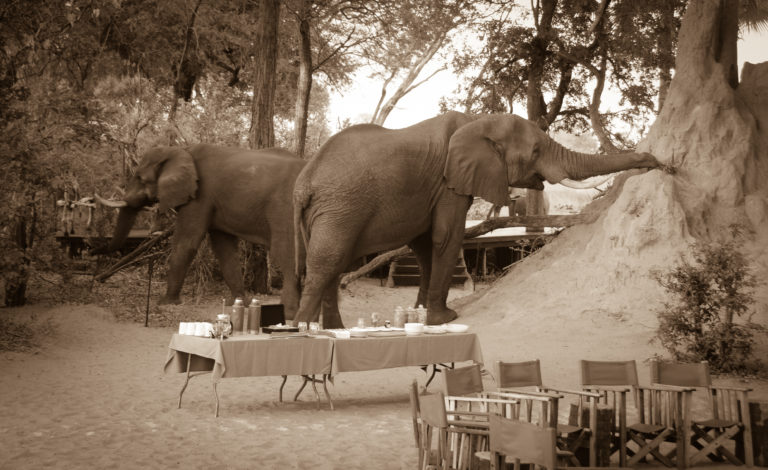 African Horse Back Safaris lunch with the elephants