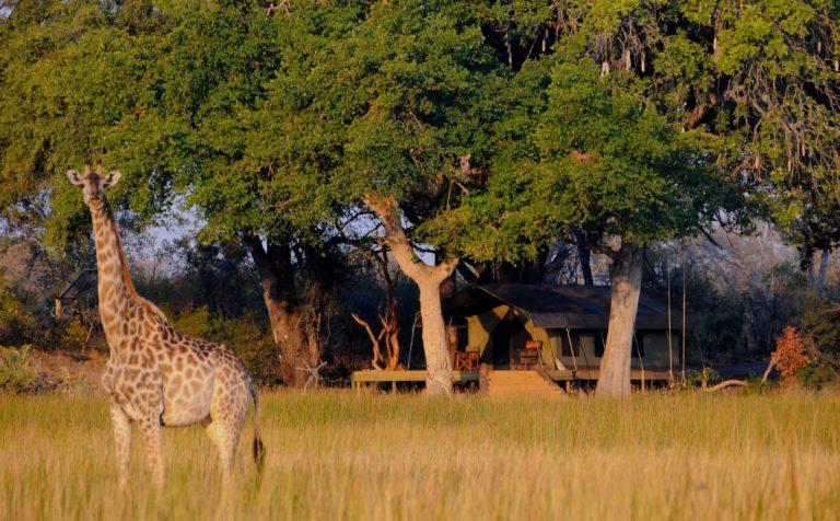 African Horse Back Safaris Macatoo Luxury Bush Camp