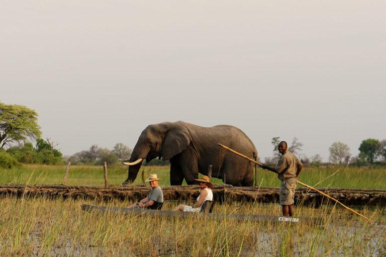 Horse Back Safaris non riding mokoro excursion