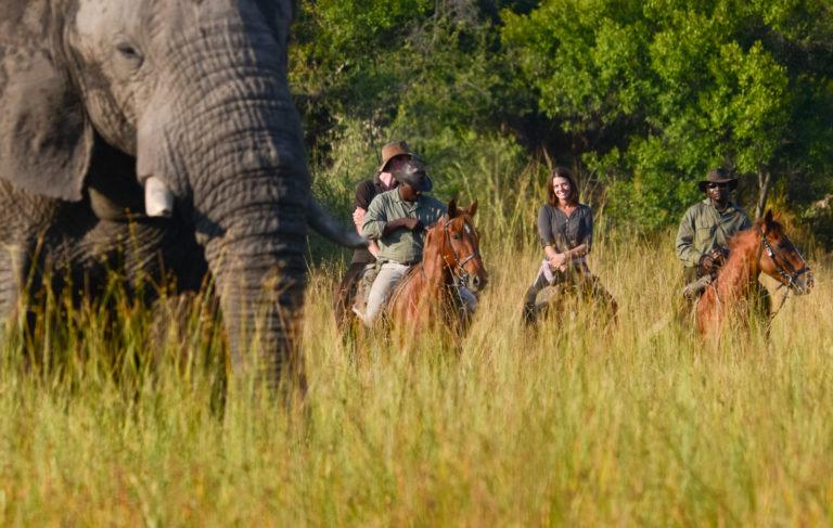 Horse Back Safari riding with elephants