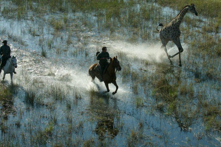 Horse Back Safari across the Delta