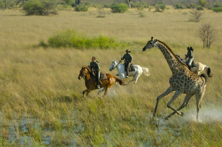 Horse Back Safaris galloping with giraffe