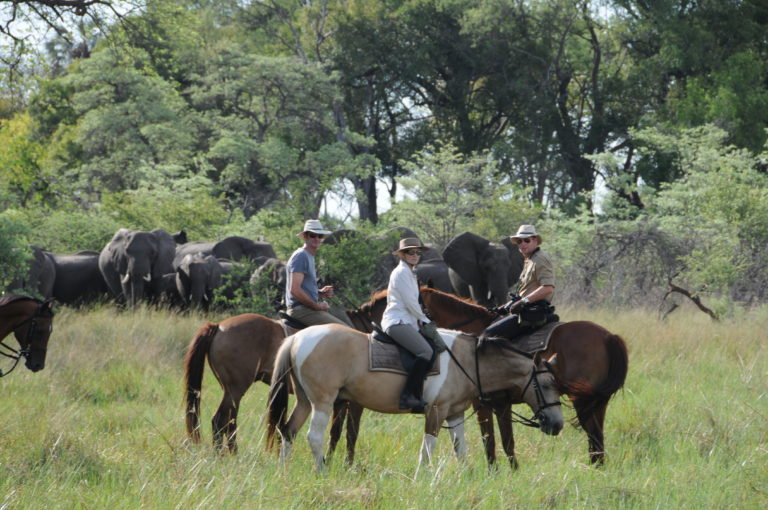 Horse Back Safaris outride in the bush