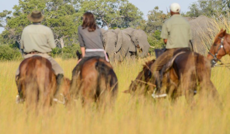African Horseback Safaris riding with elephant herd