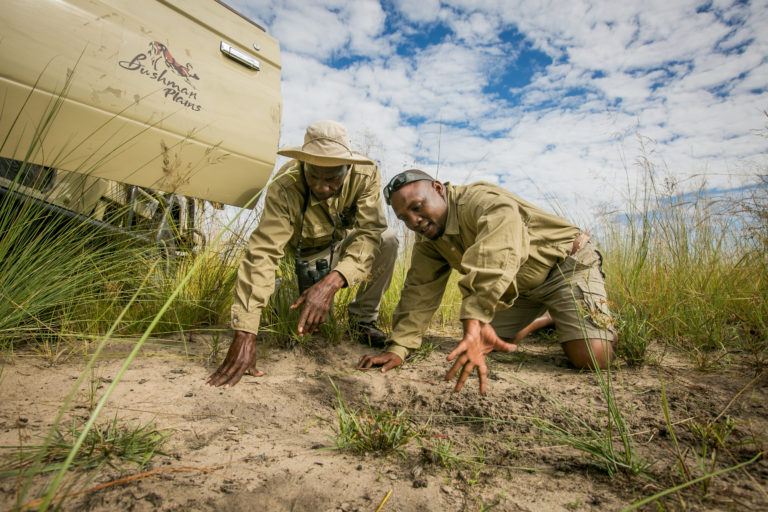 Guides from Bushman Plains Camp tracking spoor
