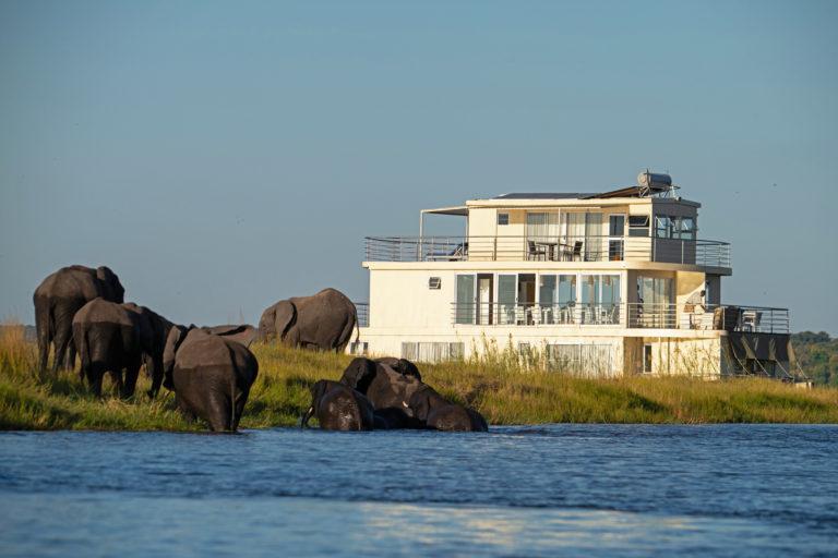 Chobe princess close to riverbank with elephants