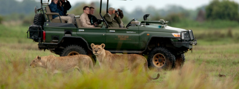 Game drive with lions at Duba Explorers Camp