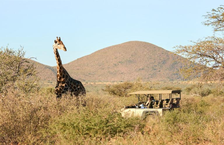 Tarkuni guests view giraffe on a game drive in the Kalahari