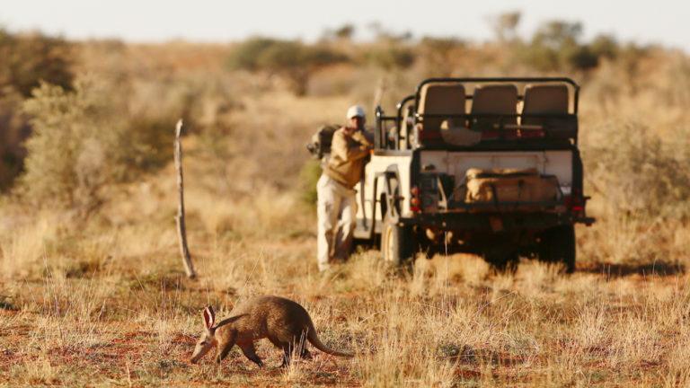 The elusive aardvark as seen on game drive at Motse Tswalu