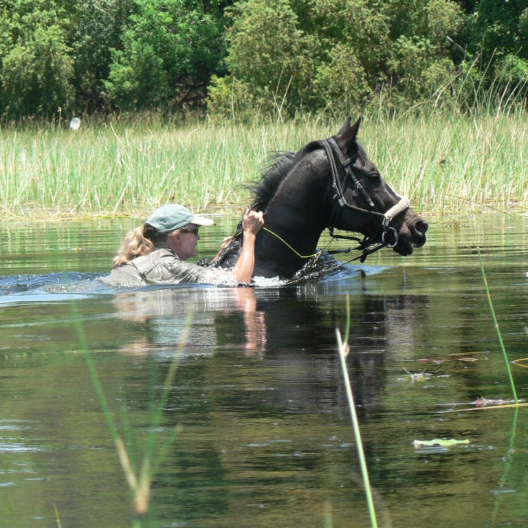Crossing the waters on horseback is a thrilling experience to have in the Delta