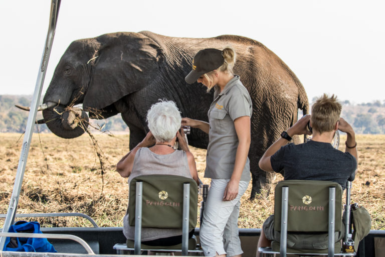 Close up elephant experience from the safari boat for Pangolin guests