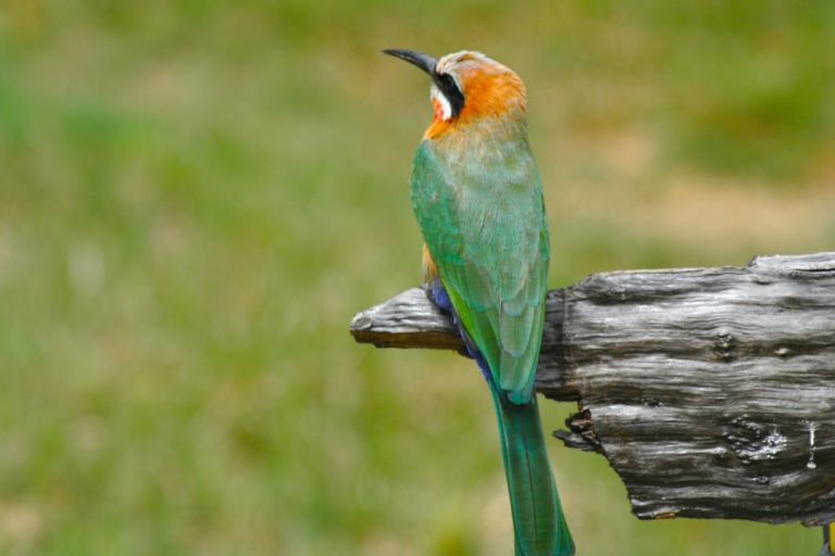 Enjoy excellent birding opportunities in the area surrounding Maun Lodge