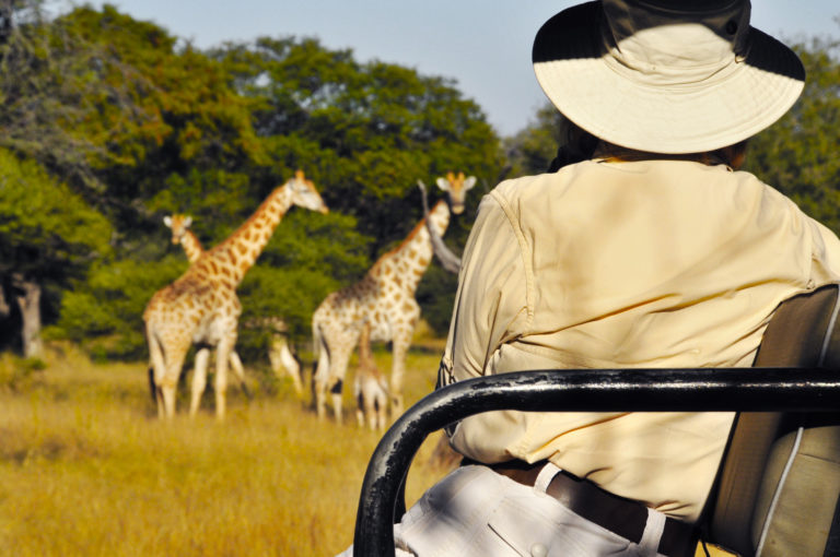Royal Tree Lodge game drives in the company of giraffes