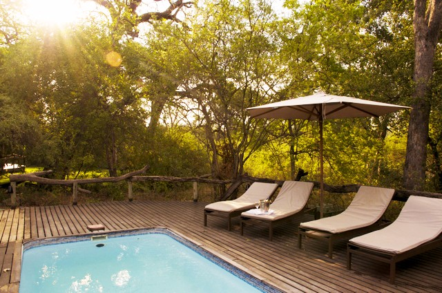 The swimming pool and deck area at Royal Tree Lodge
