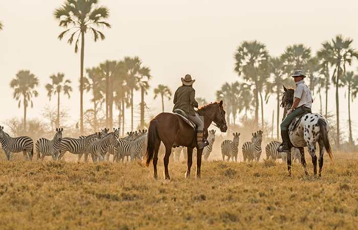 Horse riding safaris often use the Royal Tree Lodge for accommodation