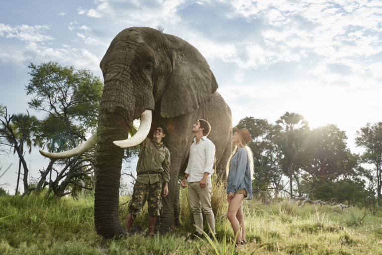 The elephant interaction is a highlight on every visitor to Sanctuary Baines Camp